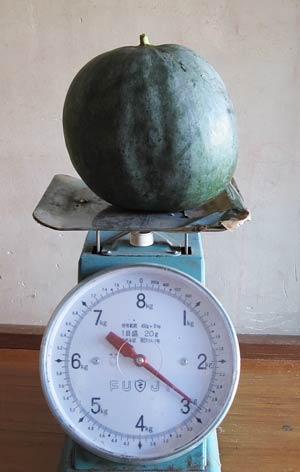 収穫したスイカの重さ
