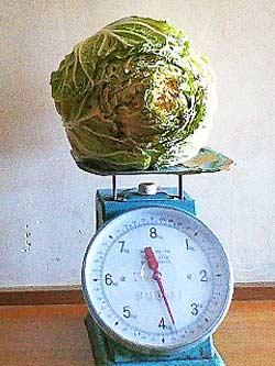 重さ3.7キロのオレンジクイン
